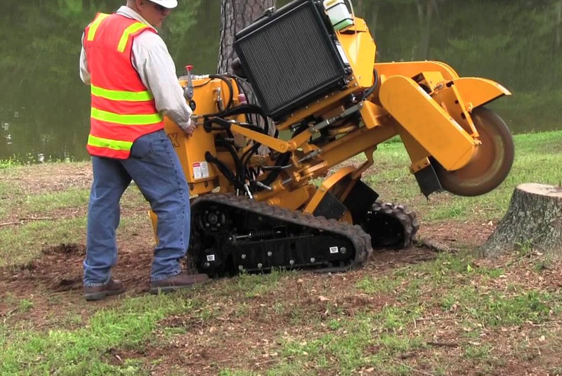 Able Arborist Tree Removal & Stump Grinding