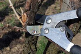 Pruning-300x300
